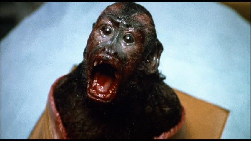 monkey-shines1